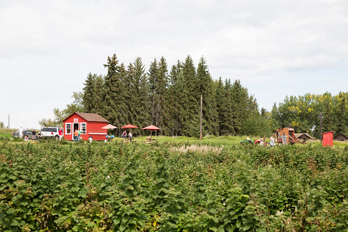 Horse Hill Berry Farm