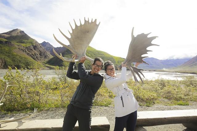 Denali caribou antlers
