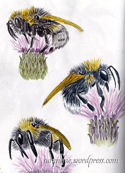 bees1-sketch
