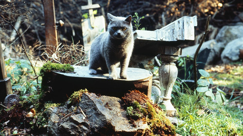 Pet Sematary - screenshot 15