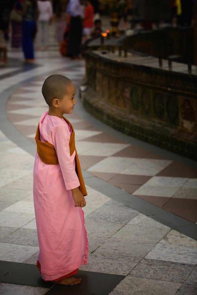 A New Novice Buddhist Nun At The Shwedagon
