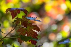 Autumn tone