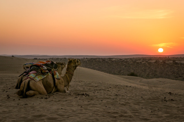 Camels watching sunset, Khuri sand dunes near Jaisalmer, India ジャイサルメール、クーリー砂丘の日没