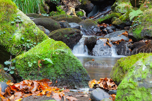 Parque Natural de #Gorbeia #DePaseoConLarri #Flickr      -1456