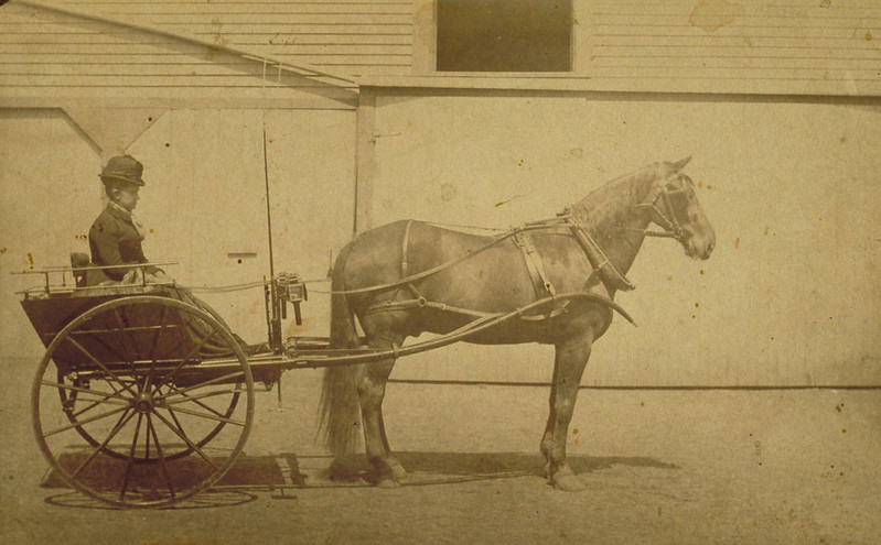 Woman in horse-drawn cart