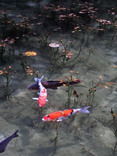 """Monet (Monet) """"Water Lilies"""""""