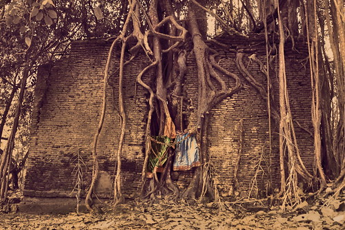 Roots and Ruins | by Neelima V