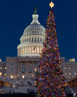 2008 Capitol Christmas Tree | by USCapitol