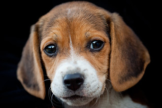 Puppy Eyes | by Thomas Hawk