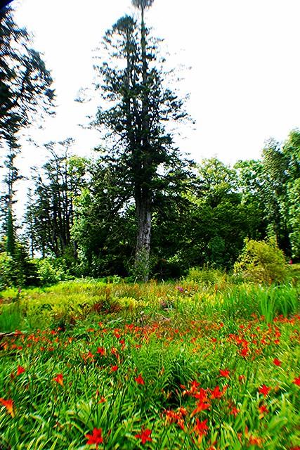 Woodland setting at Armadale Castle, Skye, Scotland.