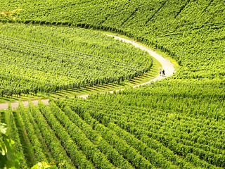 Curve in Vineyards | by Habub3