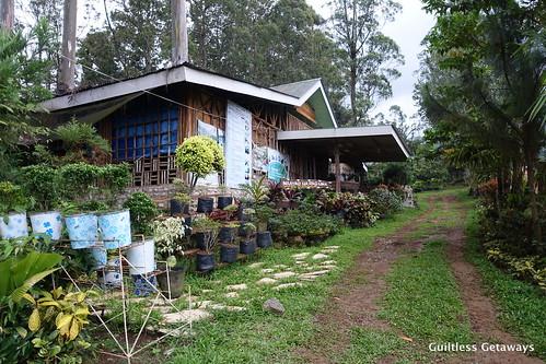 binahon-agroforestry-farm-bukidnon.jpg