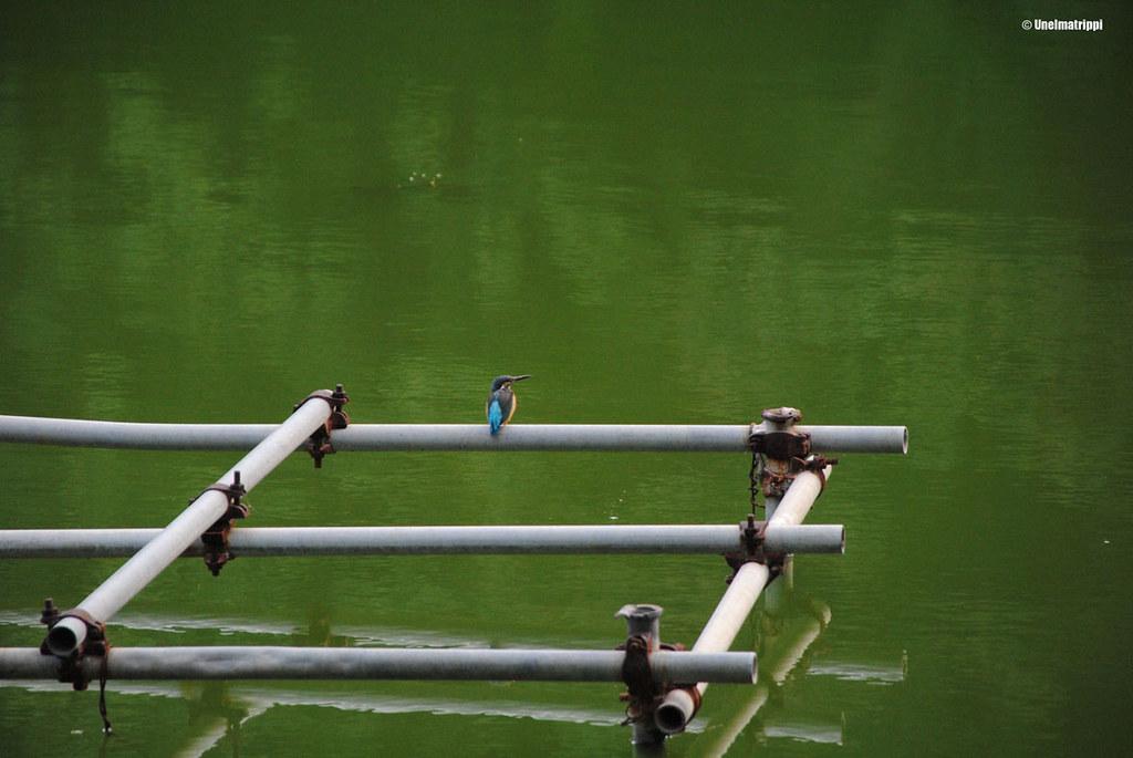 Värikäs lintu viettämässä lepohetkeä Kesäpalatsin vesialueella