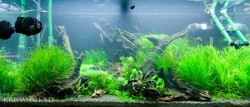 50g Aquascape Flickr Photo Sharing