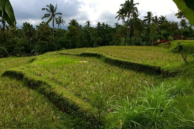 Bali Indonesia 2016 38
