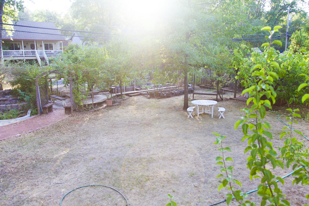 The Backyard