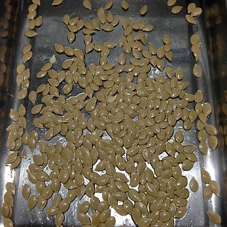 Roasting seeds from last night's squash soup | by yougrowgirl