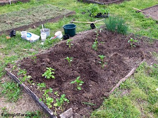 Planting peppers, basil, chives, and parsley seedlings in the kitchen garden in April | by Farmgirl Susan