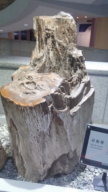 문경석탄박물관 | 규화목, 돌이 된 나무