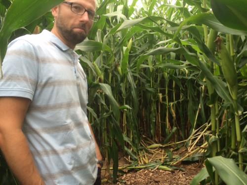corn maze ditzingen