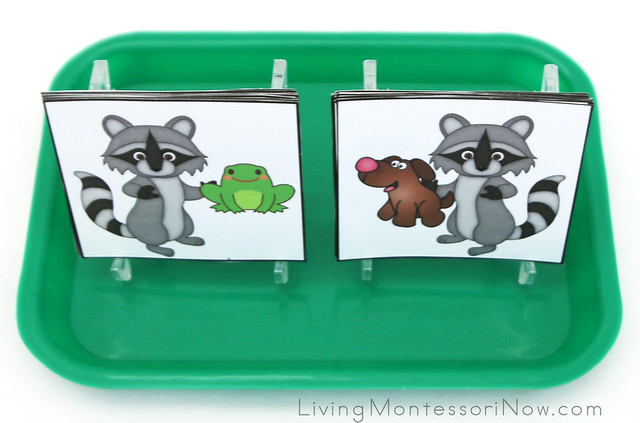 Raccoon Rhyming Activity