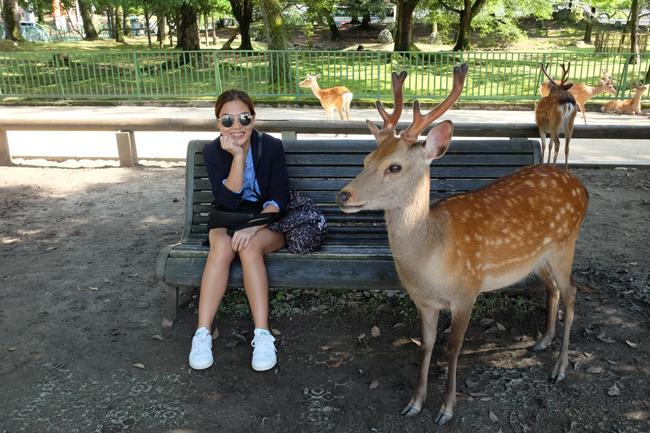 nara deer park experience 1