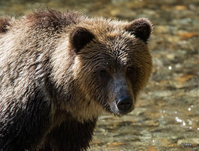 cele mai frumoase fotografii din lume 2016 flickr poze superbe fotografii foarte frumoase din diferite zone ale lumii Close Encounter of the Bear Kind