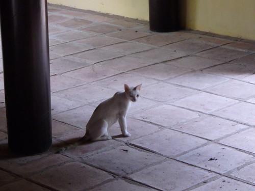 thieu-tri-temple-cat