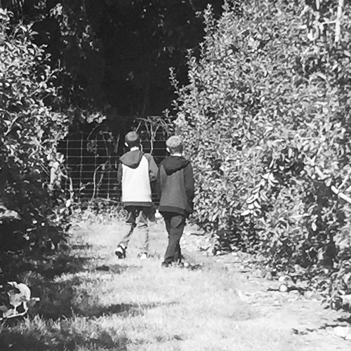 Apple picking and apple sauce
