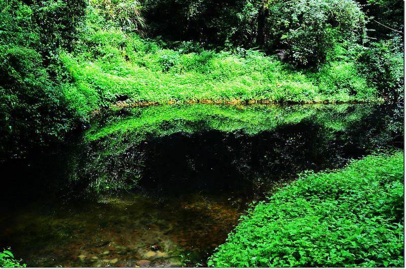 忘憂森林的綠 (3)