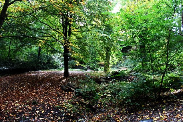 Woodland garden at Plas Newydd, Llangollen, Wales