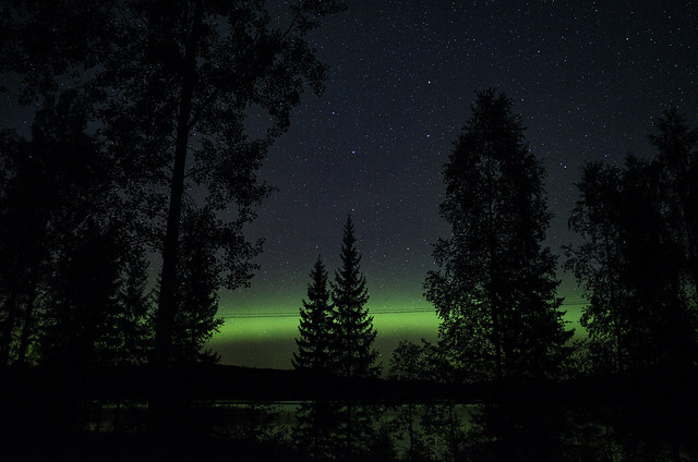Aurora borealis hidden by trees