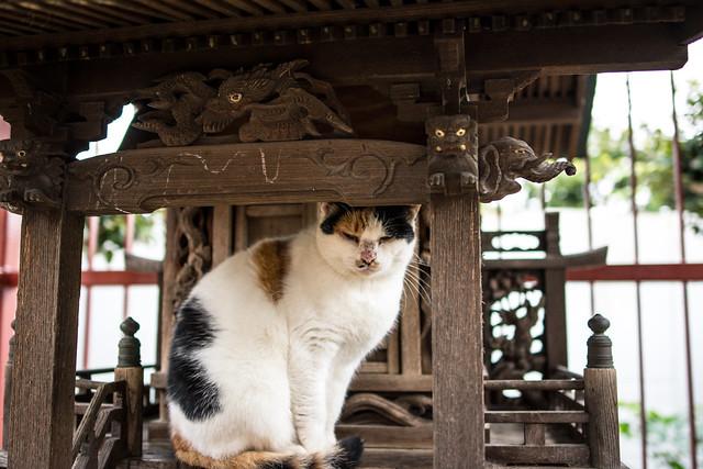 神社のお稲荷さんの社でくつろぐネコネコの写真