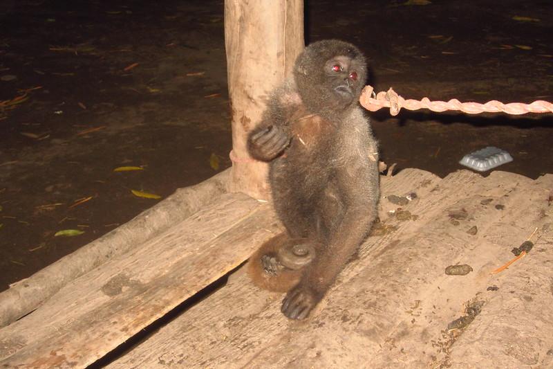 Monkey at Ashaninka Performance, Junín, Peru