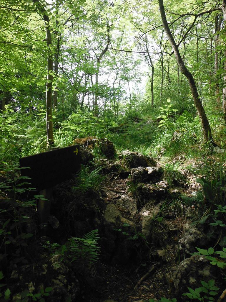 Grass Woods 6