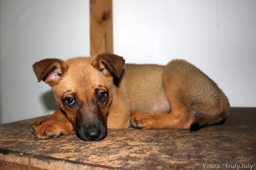 As a puppy, Lola's fur's like felt.