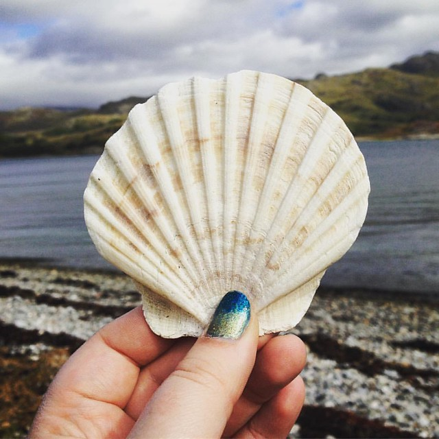 Scallop,  Rothven, Scottish Highlands  #Rothven #scottish highlands #scotland #scottishscenery