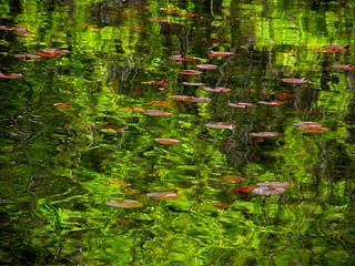 Spring Green Reflection | by Stanley Zimny (Thank You for 19 Million views)