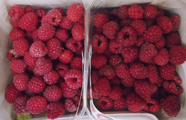 Pick your own raspberries Ashburton Devon. Full punnet of juicy ripe fruit.