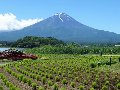 jp16-Fuji-Kawaguchiko-Nord-Shizen Seikatsu-kan (10)