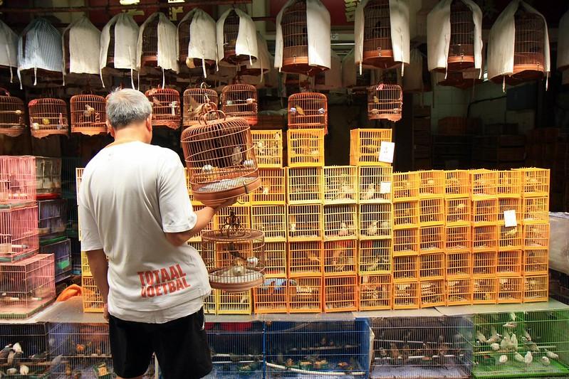 Hong Kong Bird Market 4 - best for kids