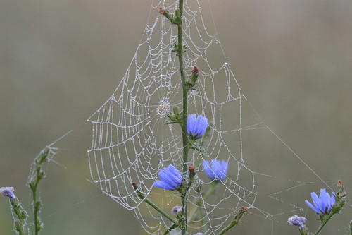 A Web With Blue And Dew - A Nature Art Print | by Stu Willard