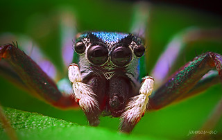 Angry Spider :) | by james-ac