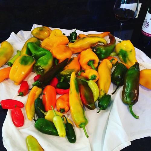 Time to do something about this Pepper Propagation! #csalife #csabushel #csa #gardensarecool #fermenting #dehydrator #hotsauce