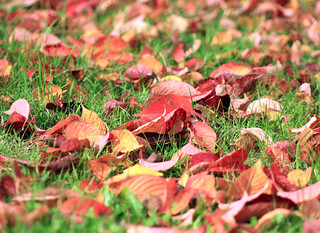 Colorful Lawn | by Steffe