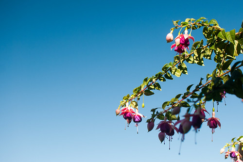 Fuchsia on Lombard | by phil dokas
