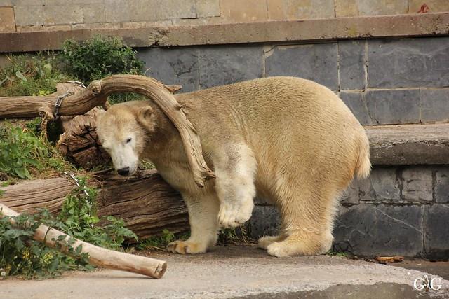 Zoo Rostock 2. Teil 20.08.201662
