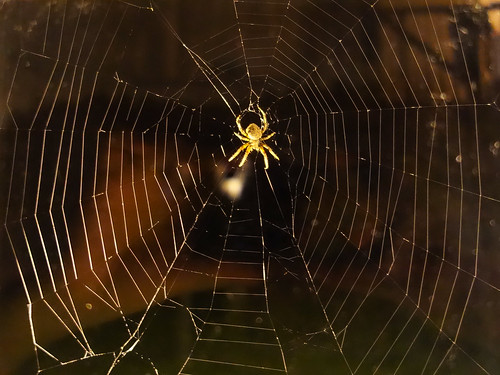 ##SPIDER | by cribcage