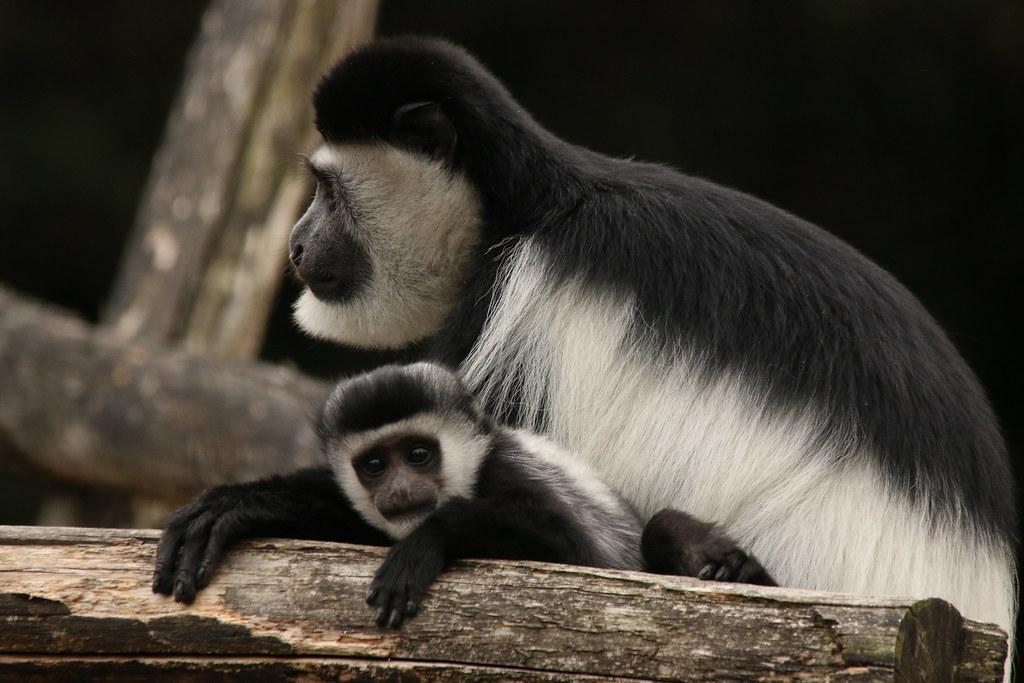 Zoo de la Boissère du Doré 29587250882_b1353f06f1_b