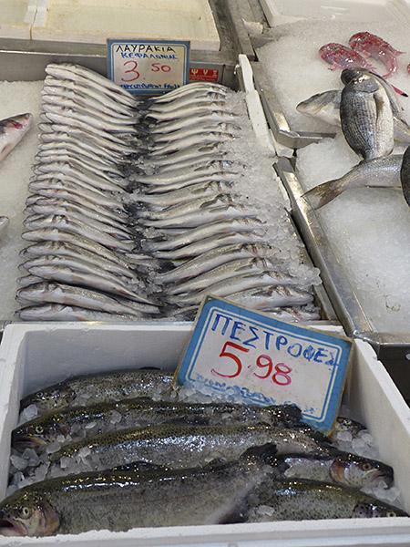 poissons en rang … d'oignon !